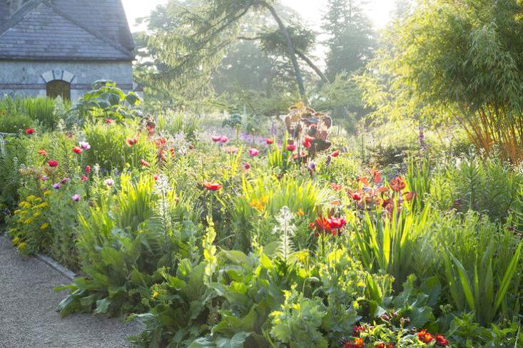 june-blake-garden-poppies-gardenista