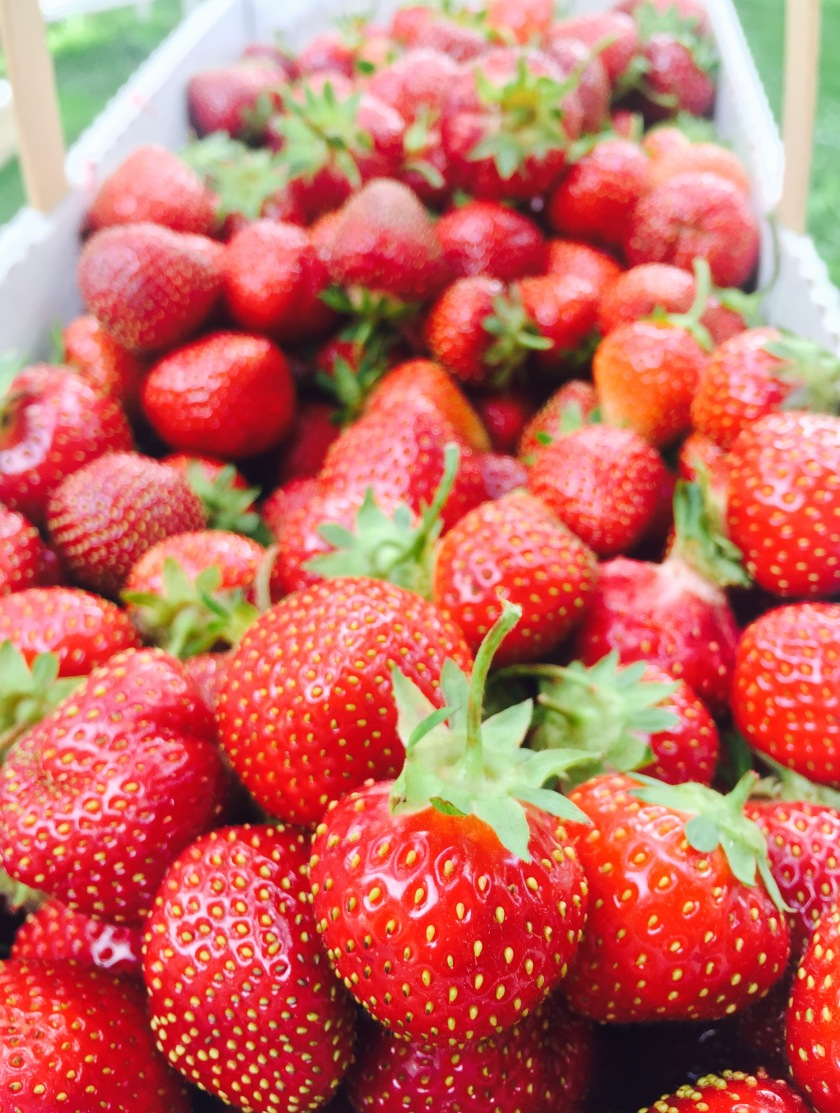 Our freshly picked strawberries at Four Town Farm, Seekonk MA
